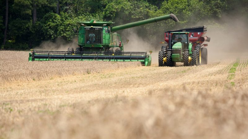 Farmer harvests wheat with combine and blows it into grain truck on farm on Eastern Shore of Virginia.
