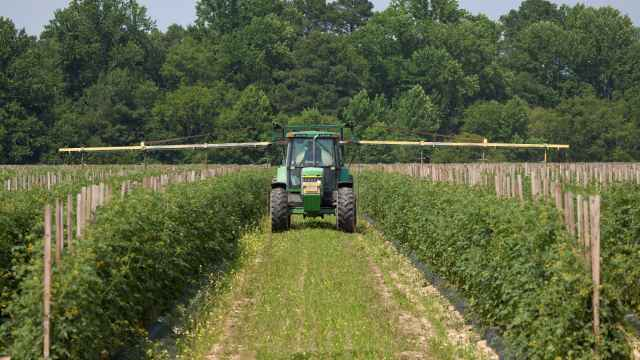 Farmer sprays tomato plants for insercts at this Virginia farm.