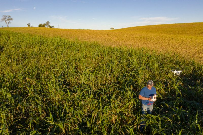 Farmer stands in the middle of a field operating a drone.